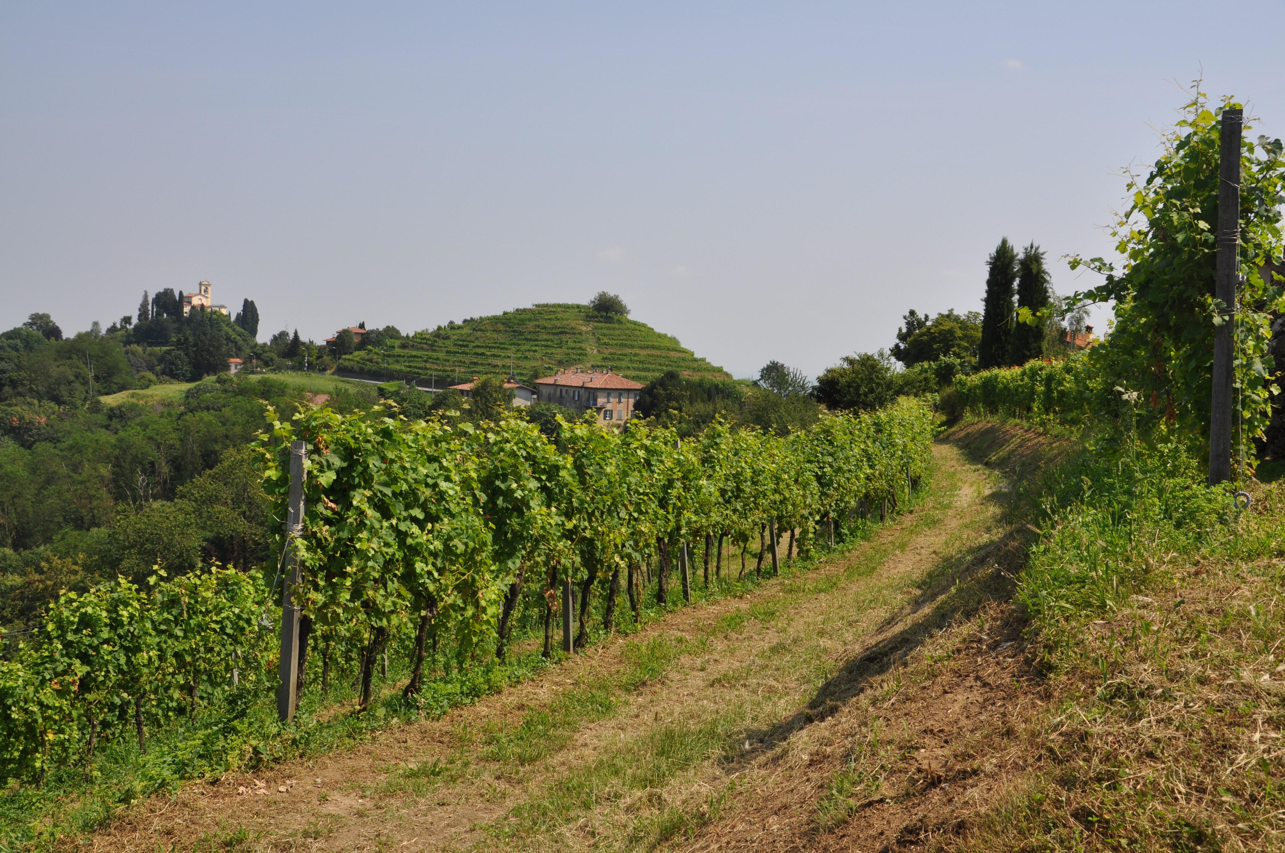 Terrazze di Montevecchia | Terre Lariane