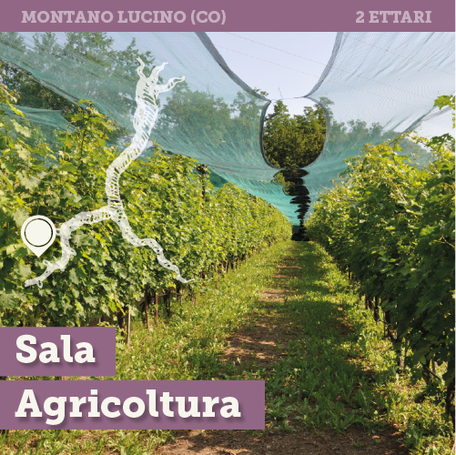 Awesome Montevecchia Le Terrazze Ideas - Design and Ideas ...